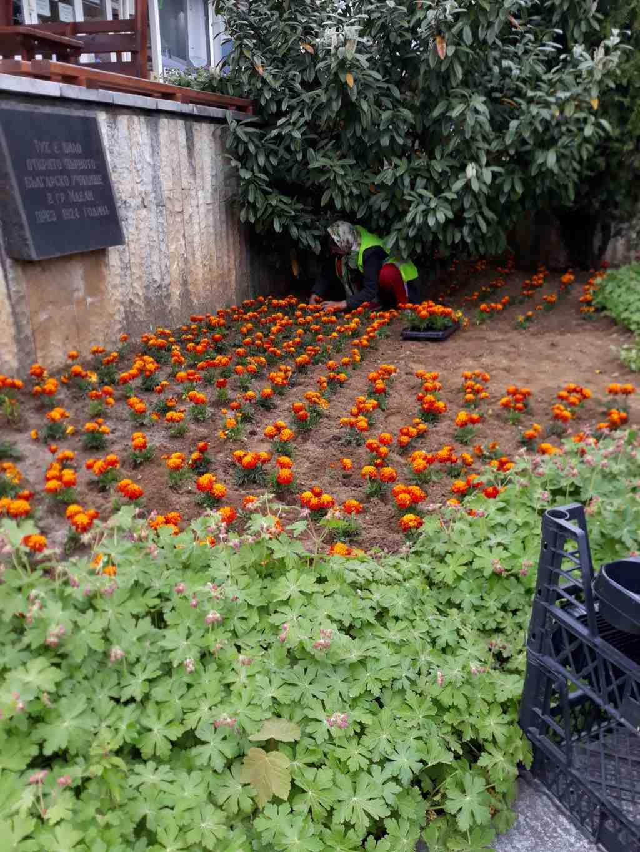 Започна почистване и оформяне на алеите, които се засаждат с пролетни цветя, подходящи за сезона